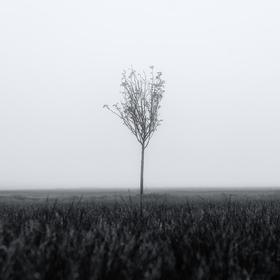 Sami v mlze