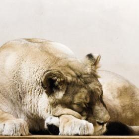 Odpočívající královna