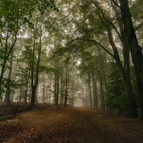 Pod korunami stromů