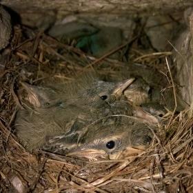Poslední chvíle v hnízdě