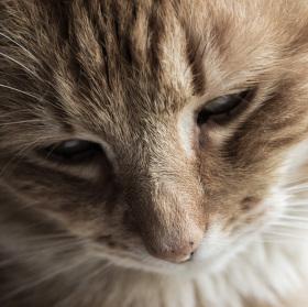 I kočky mají duši