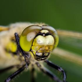 F26 Dragonfly