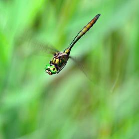 Vrtulník ze světa hmyzu