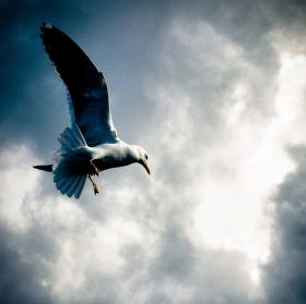 Křídla svobody