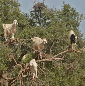 Zpět na stromy...