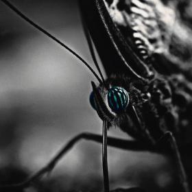 V očích motýla