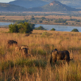 Pilanesberg safari