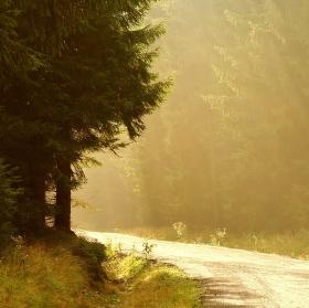 v lesním svitu