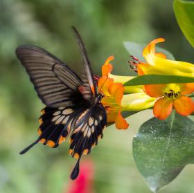 Dotek motýlích křídel