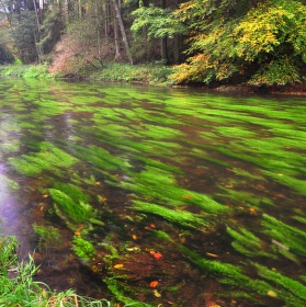 Vodní trávy