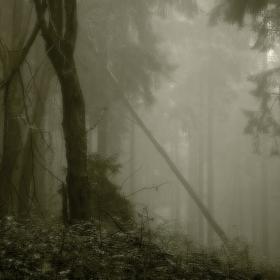 O lese hlubokém