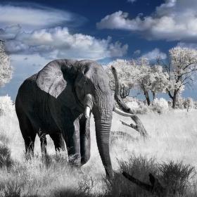 IR krajina s pětinohým slonem