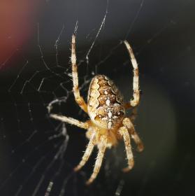 Pavouček pro štěstí.