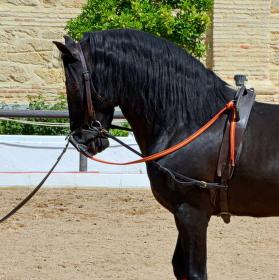Výcvik andaluzského koně