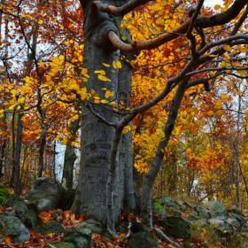 Podzim v plném proudu