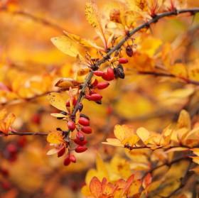 Barvy končícího podzimu
