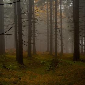 Jizerský podzimní les