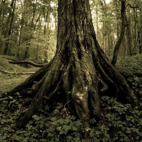 Lužní les XIX - Přírodní rezervace Polanský les