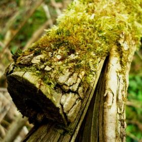 Kousek lesa