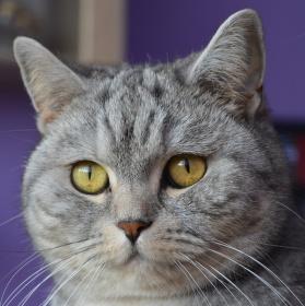 moje kočka MÁJA