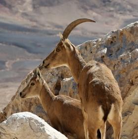 U kráteru Ramon v Israeli