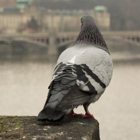 Pohľad na Vltavu