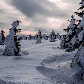 Krkonoše pod sněhem
