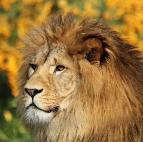 Král :-)