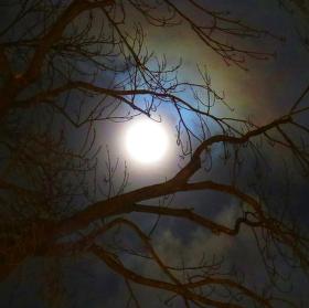 ...moonlight shadow...