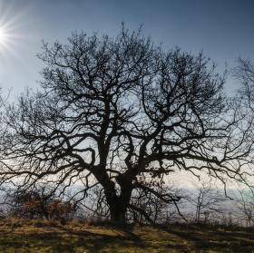Slunce a strom.