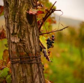 Poslední dech podzimu