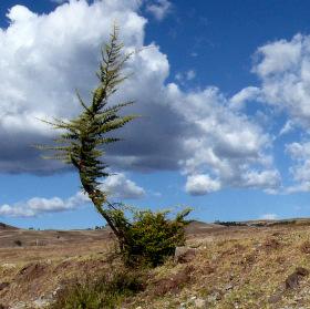 Tančící strom