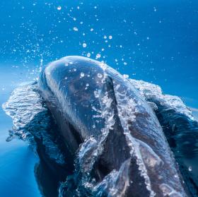 Divoký delfín...