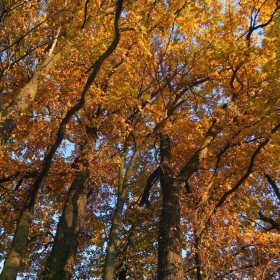 stromoví