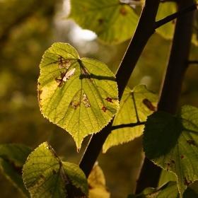 v podzimním svitu