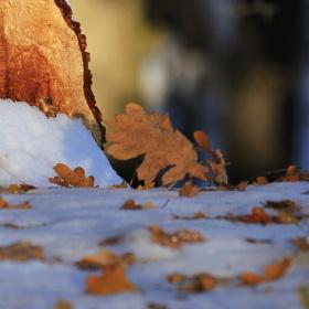 Sám s podzimem a se zimou