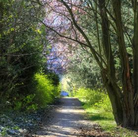 Kvetoucí krása u cesty