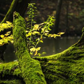 Lužní les XXIV - Přírodní rezervace Rezavka