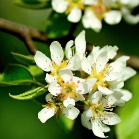 Květenství