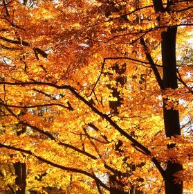 Podzim hoří I.