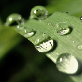 Tráva v dešti