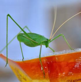 Zmlsaná kobylka