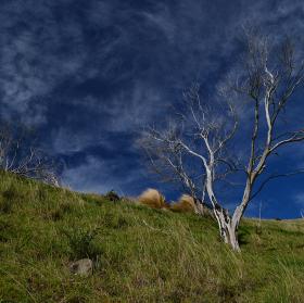 strom ve větru