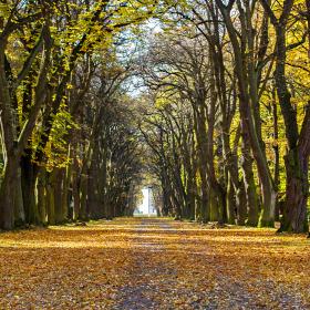 Podzim v aleji