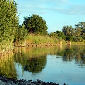 rybníková