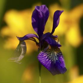 Jaro - nejkrásnější období, nádherné barvy jara