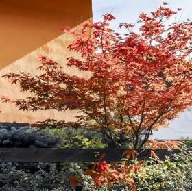 Podzimní kompozice