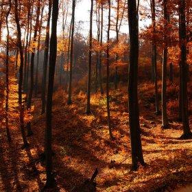 Magický les