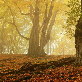 Hukvaldský les