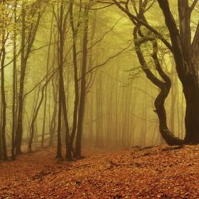 Hukvaldský les II.